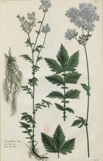 Plantes des Alpes et Pyrénées